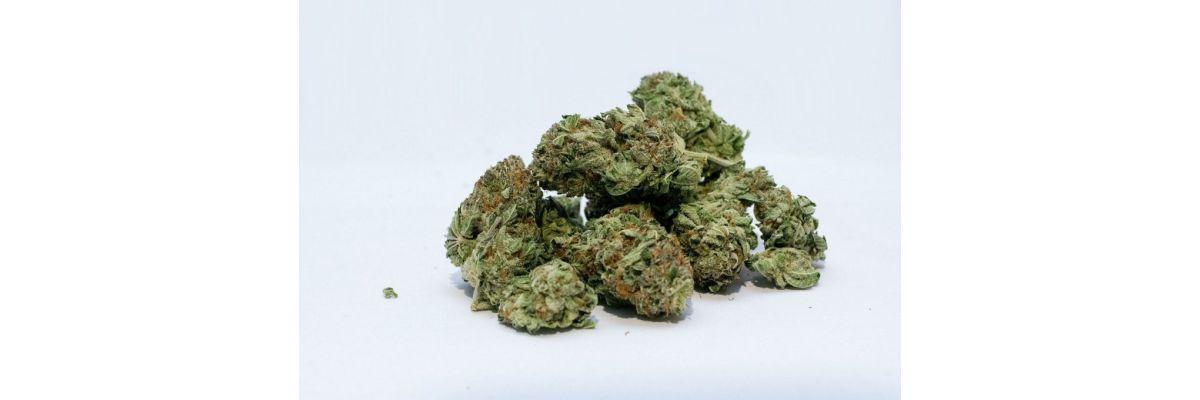 Cannabis Ertrag Steigern Outdoor & Indoor – In 10 Schritten mehr Gras - Cannabis Ertrag Steigern Outdoor & Indoor – In 10 Schritten mehr Gras