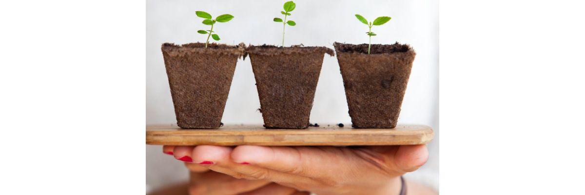 Cannabis Low Budget Grow – Was sollte man unbedingt alles beachten? - Cannabis Low Budget Grow – Was sollte man unbedingt alles beachten?