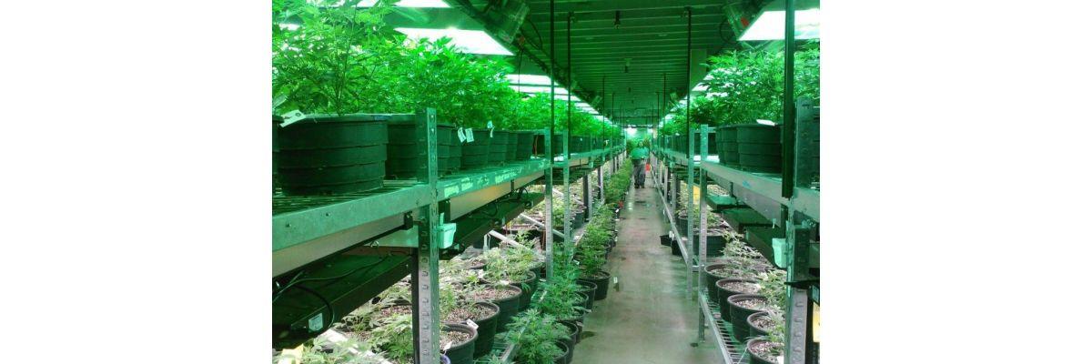 Anfänger Cannabis Anbau Growbox – Growguide Teil 3 - Anfänger Cannabis Anbau Growbox – Growguide Teil 3