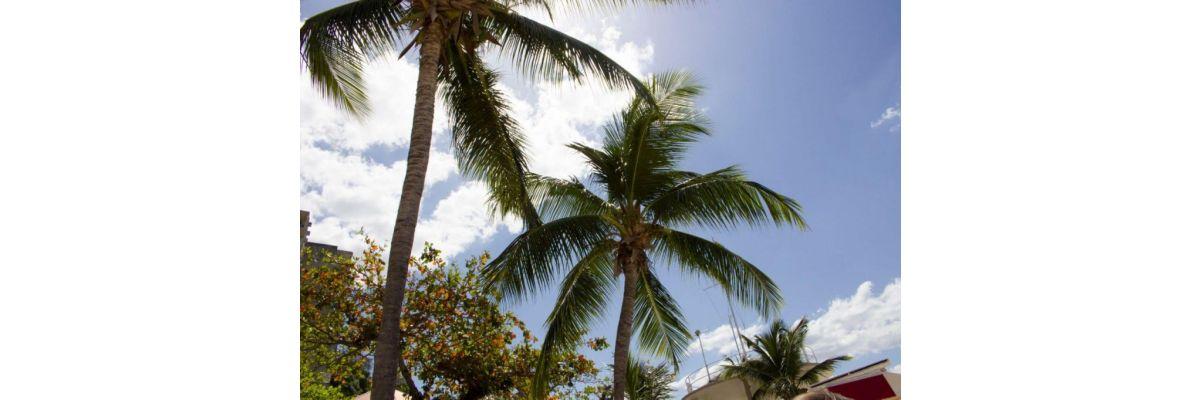 Jamaika Urlaub Teil 1 – Wetter & Montego Bay - Jamaika Urlaub Teil 1 – Wetter & Montego Bay