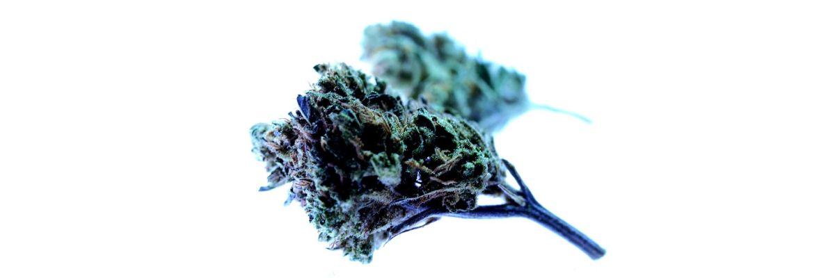 Cannabis ist kein Brokkoli - Legalisierung in 2021 - Cannabis ist kein Brokkoli - Legalisierung in 2021