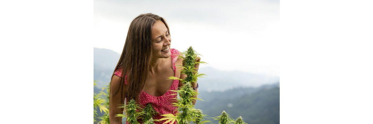 Cannabis Spargeln verhindern - Wie begegnet man dem Problem? - Cannabis Spargeln verhindern - Wie begegnet man dem Problem?