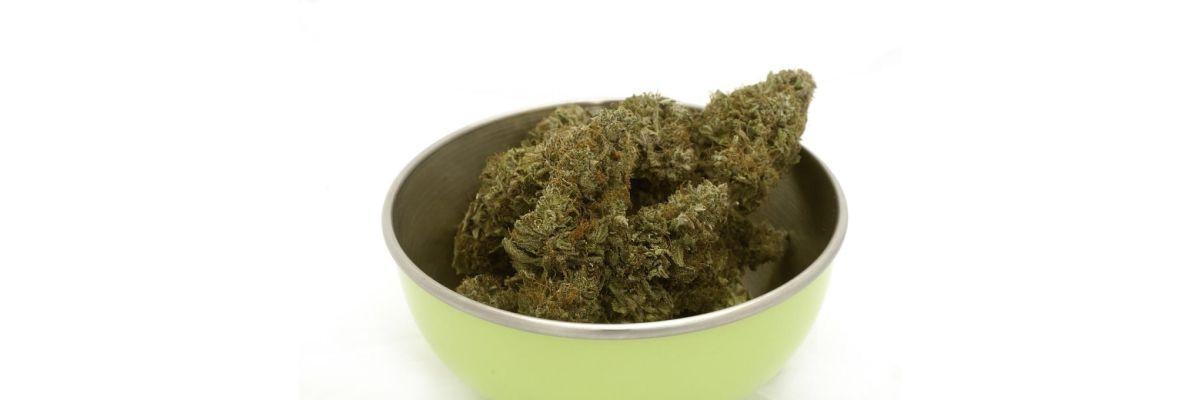 Cannabis Ernten Blätter – Anleitung für Einsteiger & Fortgeschrittene - Cannabis Ernten Blätter – Anleitung für Einsteiger & Fortgeschrittene