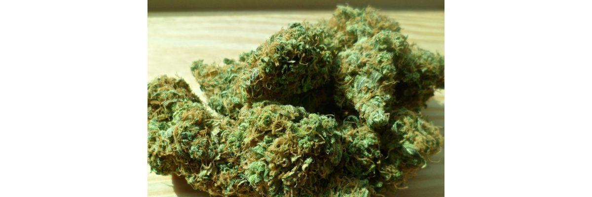 Cannabis Erntemaschine/Trimmer kaufen – Funktion & Nutzung - Cannabis Erntemaschine/Trimmer kaufen – Funktion & Nutzung